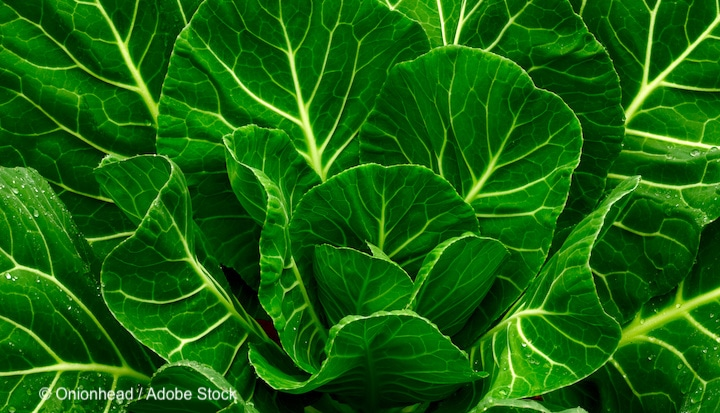 collard-greens-vegan-protein-source